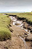 Saltmarsh creek