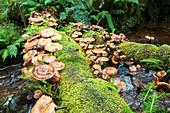 Fungi growing on a fallen tree trunk