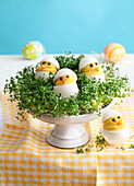 Egg chicks in a patch of cress for Easter