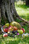 Schale mit Sommerfrüchten auf Wiese vor Baum