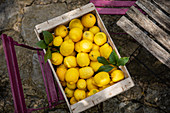 Wooden crate with freshly picked lemons
