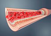 Artery, illustration