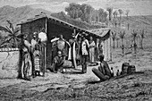 Ivory traders, West Africa, illustration