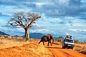 Elephant, Tsavo National Park, Kenya