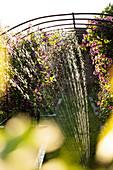Sprinkler watering purple flowers growing on trellis