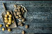 Verschiedene Kartoffelsorten auf Holzuntergrund