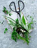 Fresh Herb, Still Life