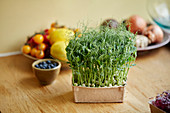 Microgreens growing at home