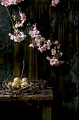 Quail eggs in nest and blooming cherry branch