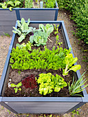 Urban Gardening - raised bed with vegetables