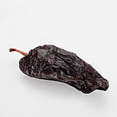 A dried Ancho Chile on white background