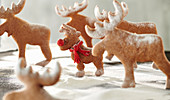 Rudi Rednose - Reindeer biscuits in icing sugar snow