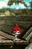 Red currants in a silver cup