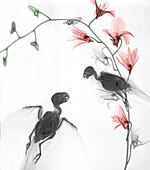 Parakeets, coloured X-ray