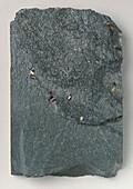 Slate with pyrite