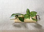 Basil (Ocimum basilicum 'Cinnamon')