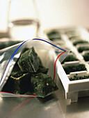 Storing frozen chopped herbs
