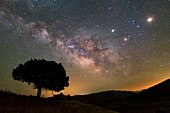 Milky Way, Mars and Saturn over a tree