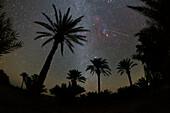 Shooting star over Palm Grove, Iran