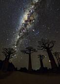 Milky Way over baobab trees, Madagascar