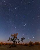 Winter constellation rising at Moonset
