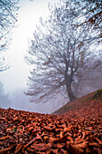Autumn in hyrcanian forests, Iran