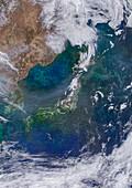 Phytoplankton around Japan, satellite image