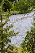 Fishing in the Conejos River, Colorado, USA