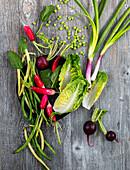 Fresh salad ingredients from the garden