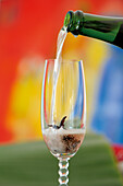 Champagne with rosella blossom