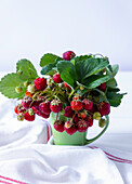 Wild strawberry in a green cup