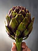 Single fresh artichoke held by a woman's hand in front of a gray textured wall.