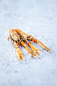 Fresh langostinos on crushed ice