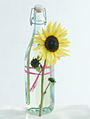 Sunflower oil in flip-top bottle