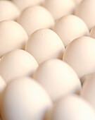 White eggs (full picture)