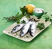 Fresh mackerel with salt and herbs