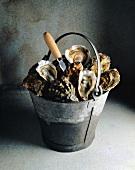Eimer mit Austern und Austermesser