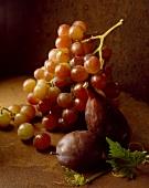 Frische Weintrauben, Feige und Pflaume auf braunem Untergrund