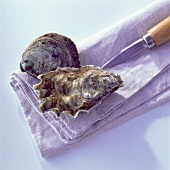 oysters, knife and tea towel