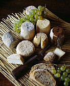 selection of goat cheeses
