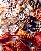 Verschiedene Krustentiere und Muscheln auf Eis (bildfüllend)