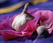 Knoblauchzehe auf violettem Tüll