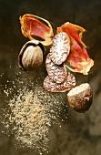 Muskatnuss, gemahlener Muskat und Muskatblüte