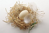 duck egg on straw with feather