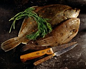 Two types of plaice