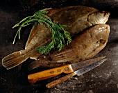 Rohe Scholle und Seezunge mit Küchenmessern