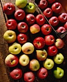 various varieties of apple