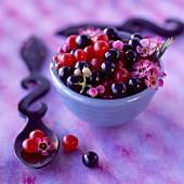 Summer fruit candy