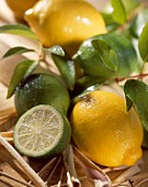 Limetten und Zitronen