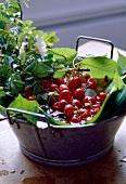 Frische Kirschen mit Blättern und Blüten in Metallschüssel